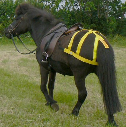 High Vis for horses